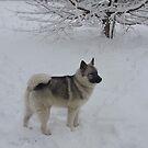 Snowy & Standing by CreativeEm