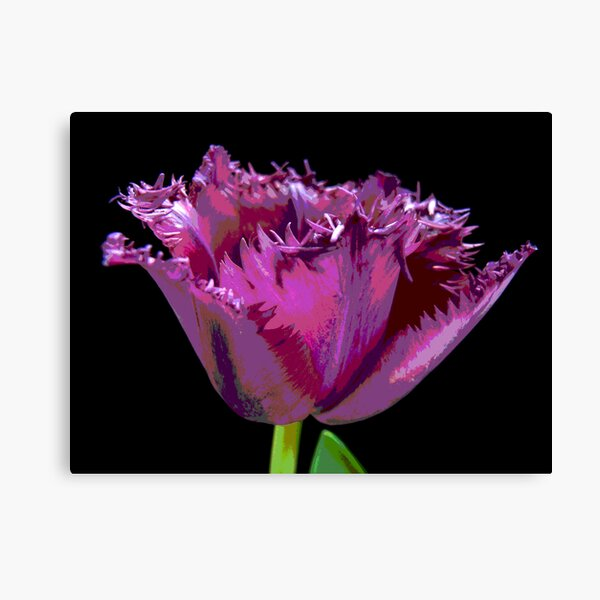 Thrilled to be Frilled Canvas Print