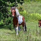 Wild Pony Siblings by Karen Peron