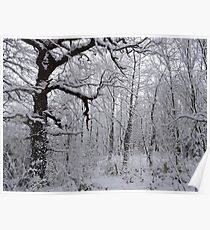 Winter Woodland Poster