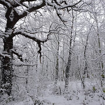 Winter Woodland by CreativeEm