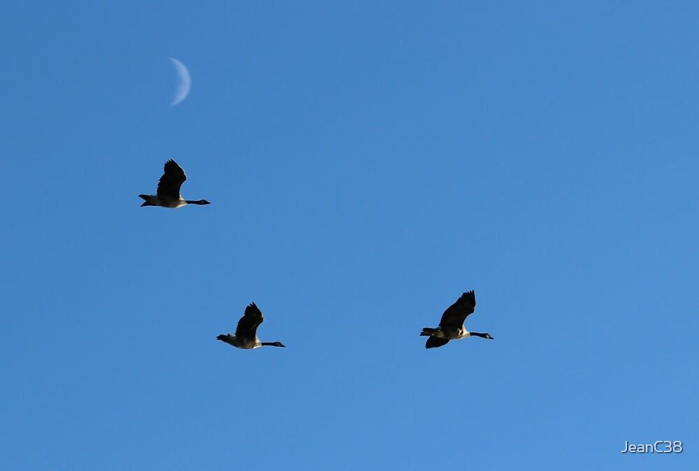 Evening flight by JeanC38