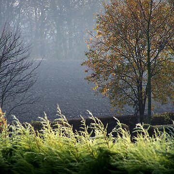 Misty morning by CiaoBella