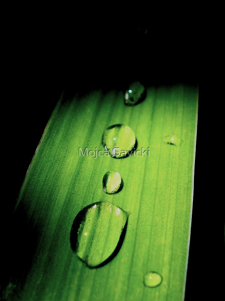 Remains of the rain by Mojca Savicki
