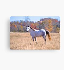 Tennessee Horse Canvas Print