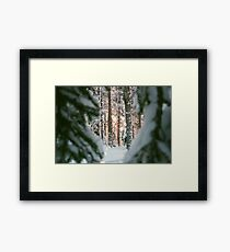 Glowing Winter Forest Framed Print