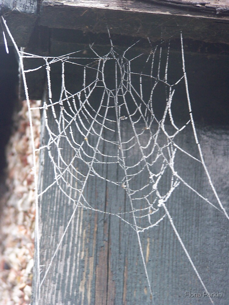 The web by Fiona Parkin