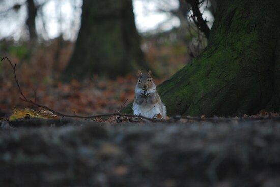 Small squirrel...Big World! by spottydog06