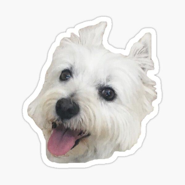 Westie head - Lily the westie Sticker