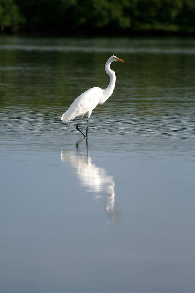 Great White Egret by Karen  Moore