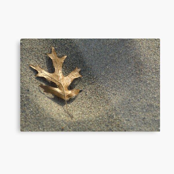 Frost on Leaf Metal Print