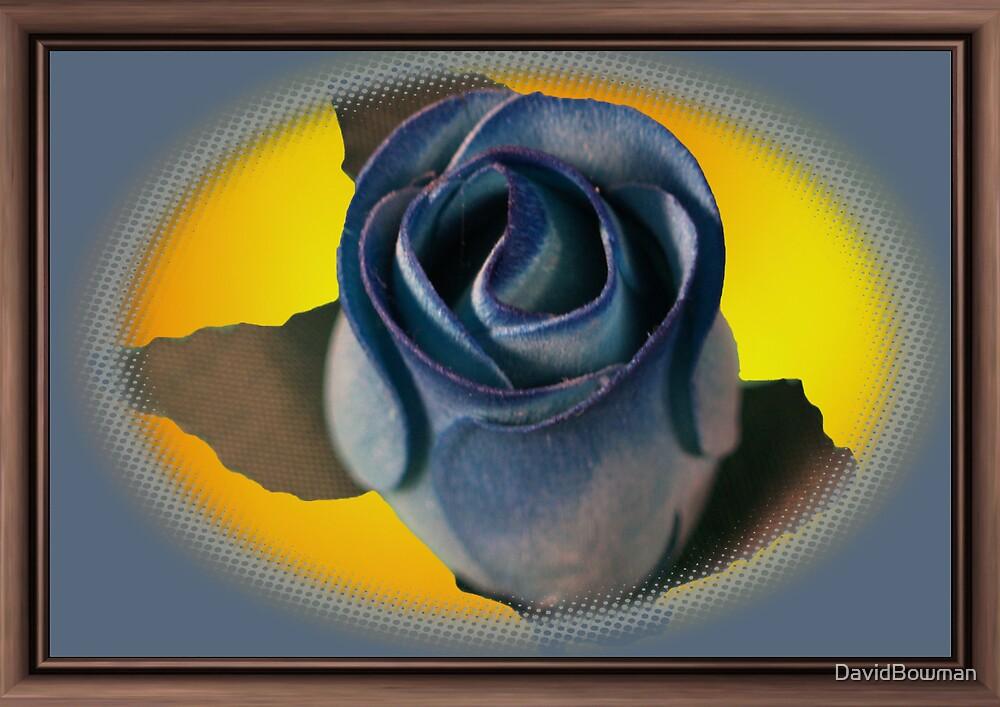 Framed Blue Rose by DavidBowman
