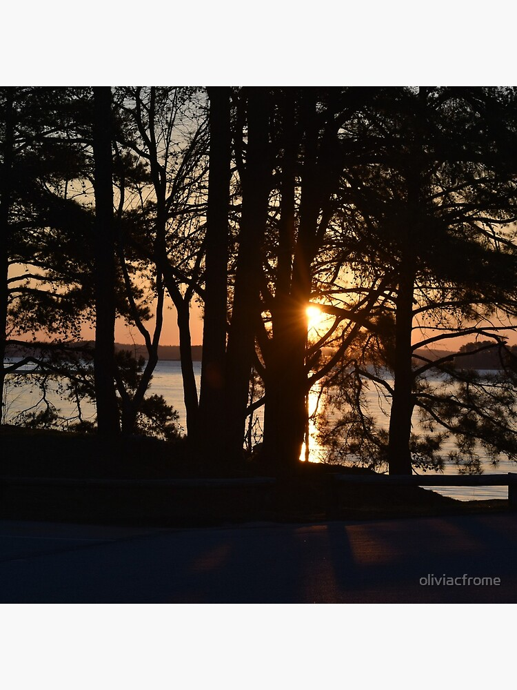 Sunrise through the Trees by oliviacfrome