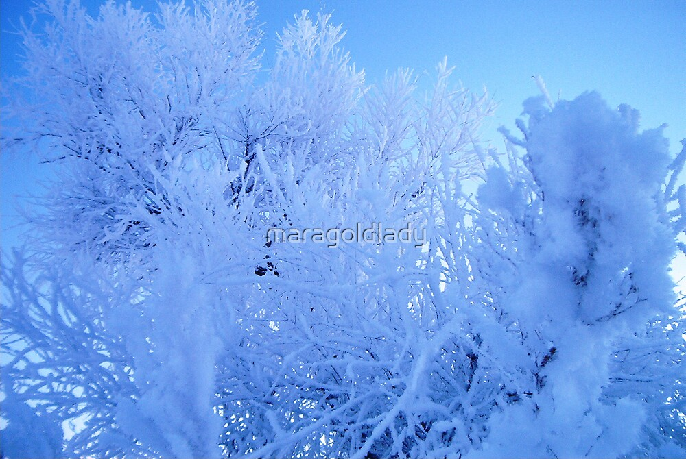 December Frost by maragoldlady