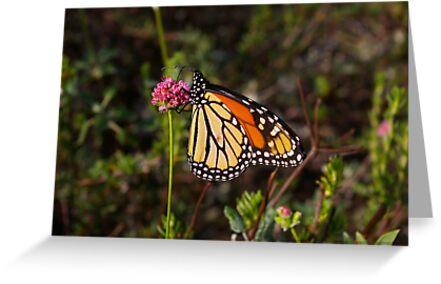 """Monarch Delight II by Lenora """"Slinky"""" Ruybalid"""