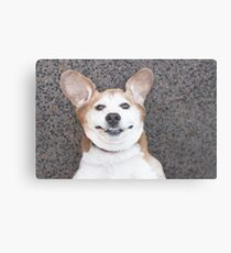Goofy beagle dog smiling Canvas Print