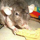 Ratty Nibbles by karenuk1969