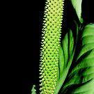 Green flower by Alojzy
