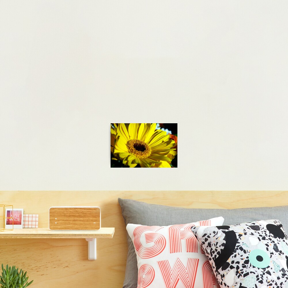 Macro Florals Photographic Print