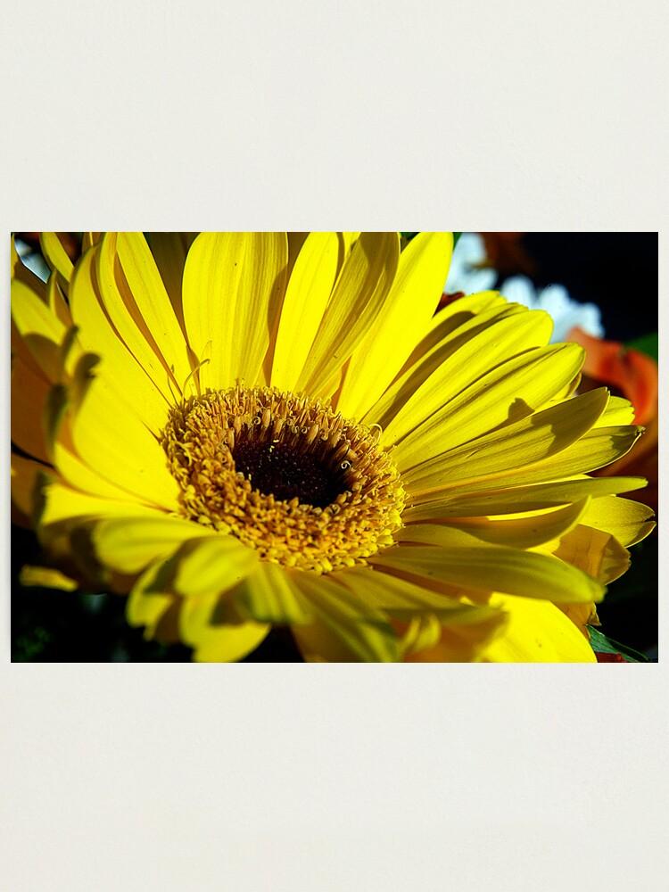Alternate view of Macro Florals Photographic Print