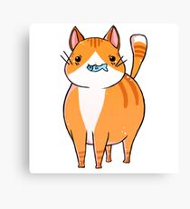 Orange and white cat Canvas Print