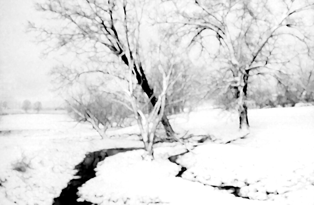 Winter Trees by Francesa