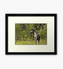 Roadside Moose Framed Print