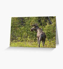 Roadside Moose Greeting Card