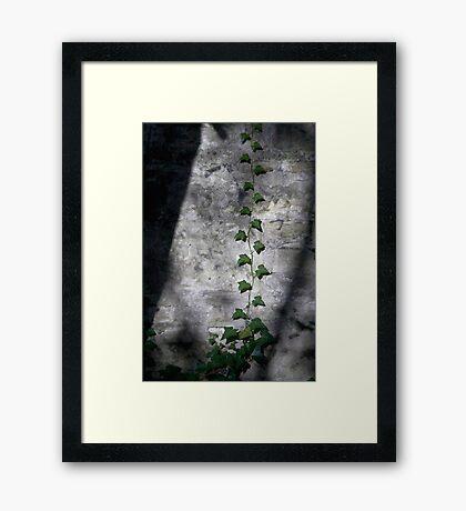Shadows & Light Framed Print