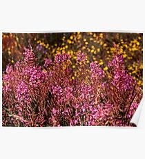 Steamboat Lake Fireweed Poster