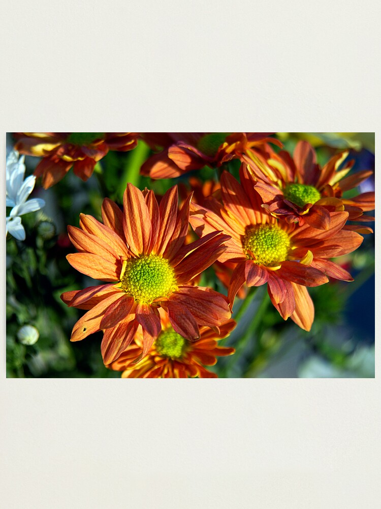 Alternate view of Macro Florals Photographic Print