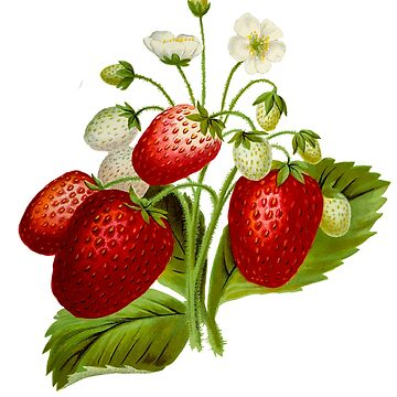 Botanical Strawberry by JNaturally