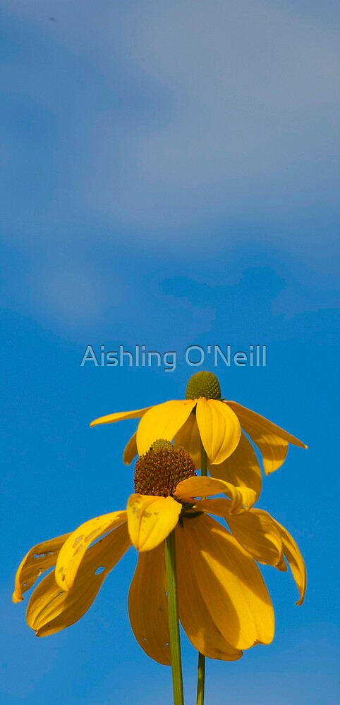 Wait For The Sun by Aishling O'Neill
