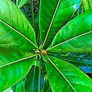 Nature Greenery by Murray Swift