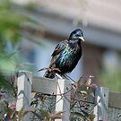 My Bird garden 3 by dougie1