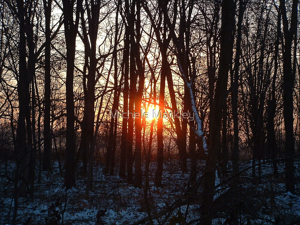 Thanksgiving Sunrise in the Woods by Michele Markley
