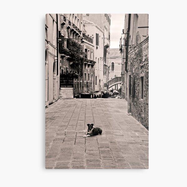 Dog Waiting Metal Print