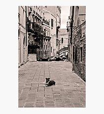 Dog Waiting Photographic Print