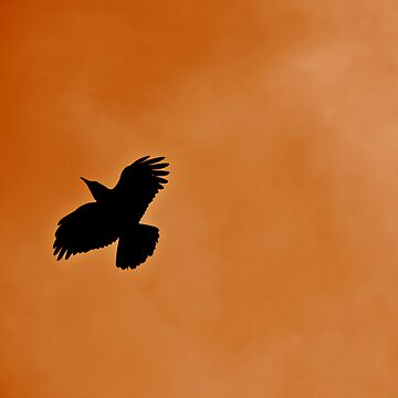 Fly Black Bird Fly by rosscojj