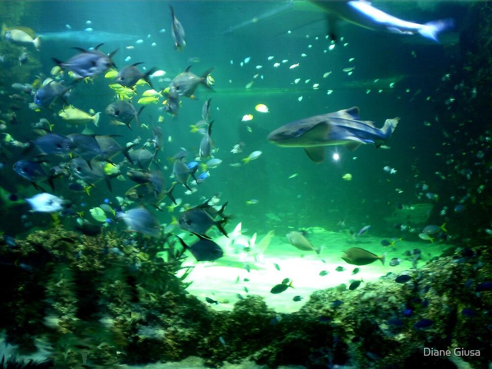Fishy by Diane Giusa