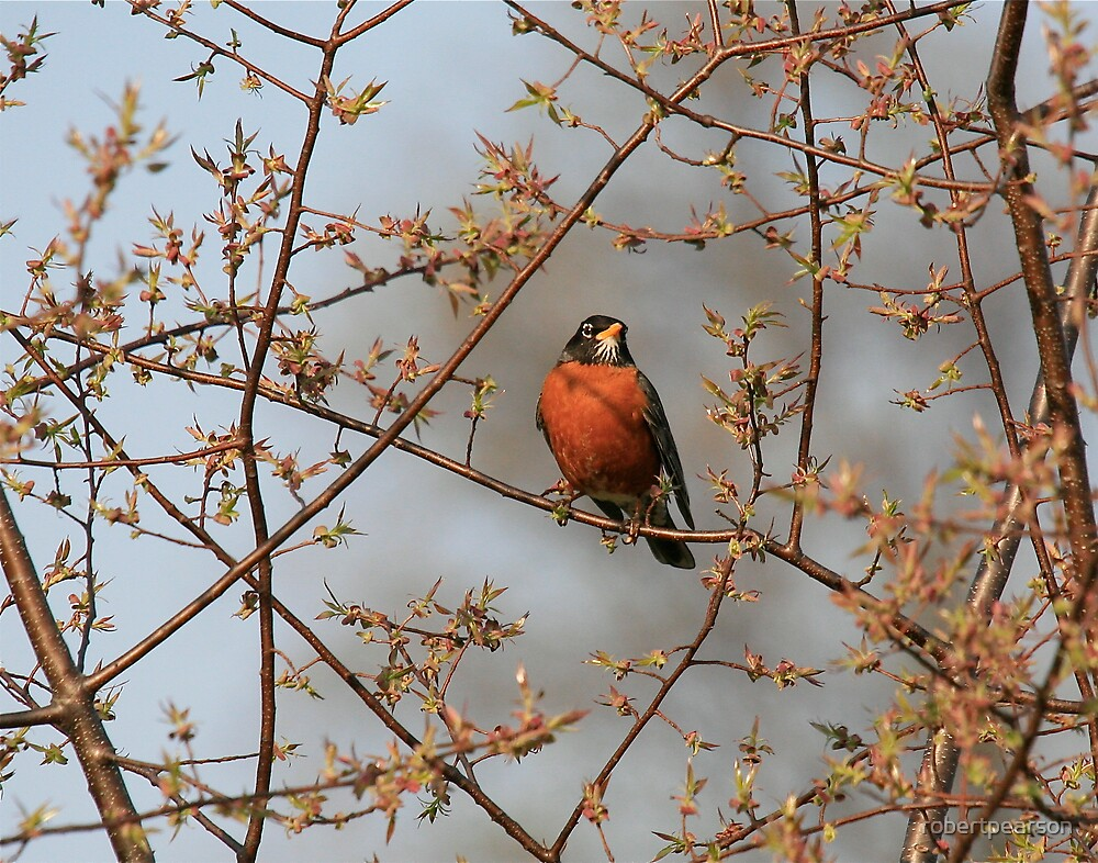 SPRING IS IN THE AIR by robertpearson