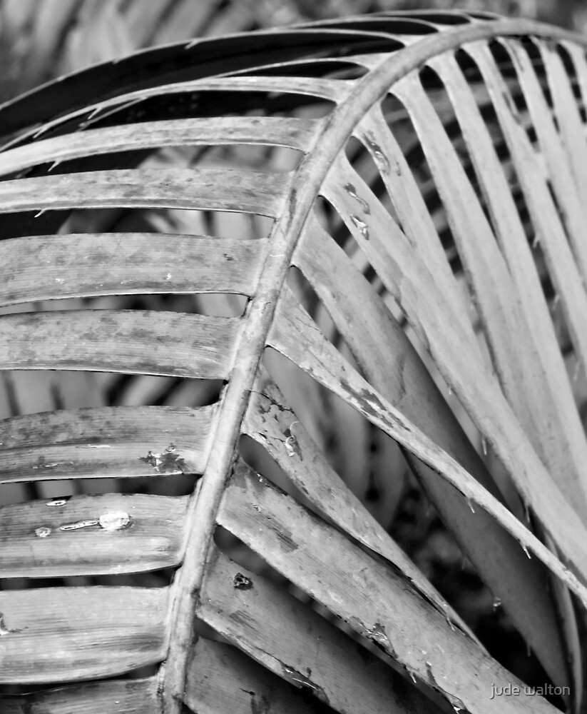 palm frond by jude walton