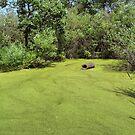 Duckweed Carpet by Teresa Zieba