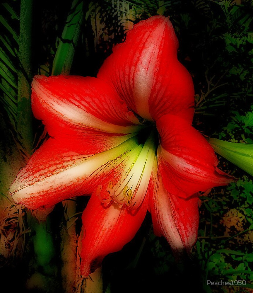 Hippeastrum - 'Strange & Wonderful' by Peaches1950