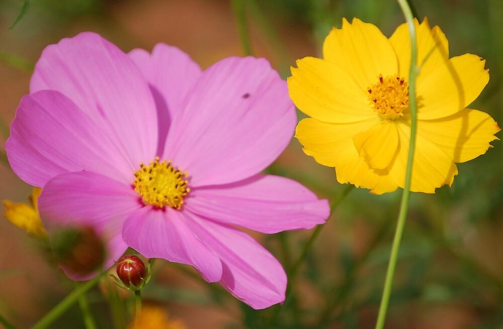 wildflowers in NC by dbcarolinagirl