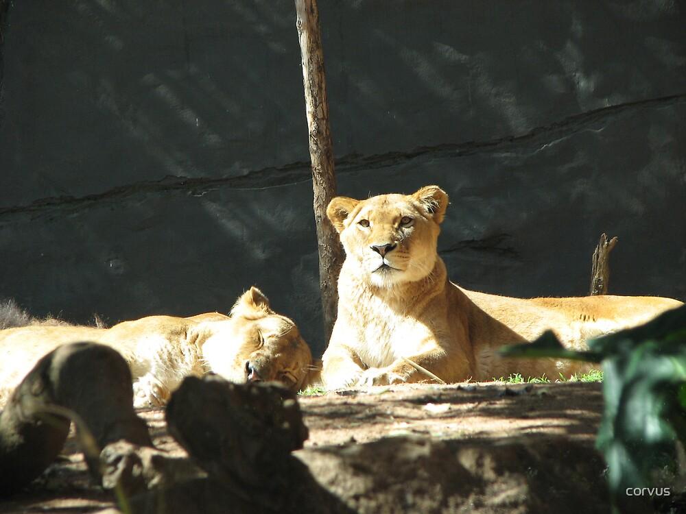 Keeping watch. by corvus