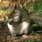 I`m Nuts About You!! by Franco De Luca Calce