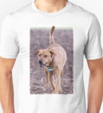 A Strolling Lab In The Park T-Shirt