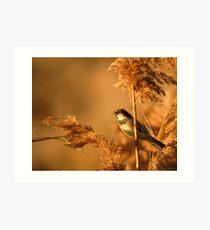 House Sparrow on Marsh Grass Art Print