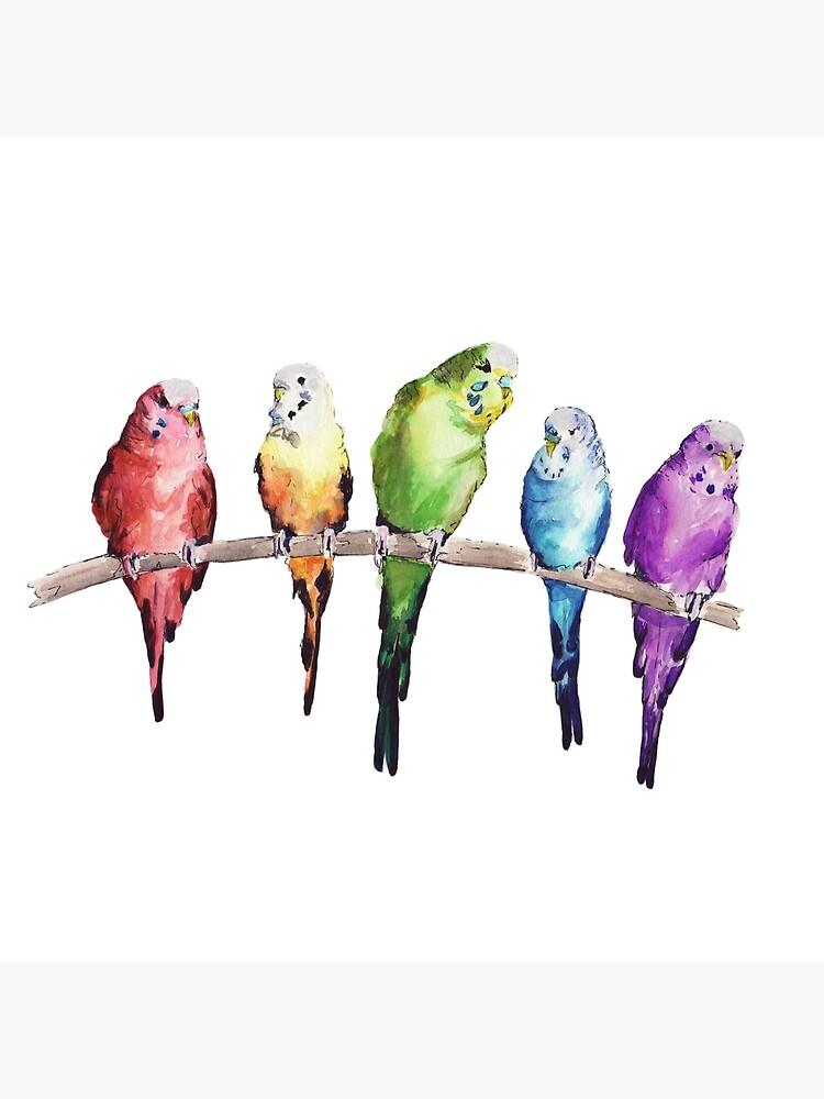 Rainbow budgie birds by bridgetdav